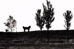 paardenkommerzijlzw